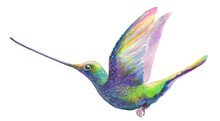Watercolor Humming Bird Isolat...