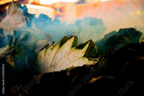 Fotografiet Pila de agave cociéndose