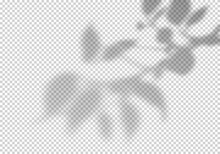 Transparent Vector Shadow Of Leaves. Creative Overlay Effect For Mockups And Summer Banners