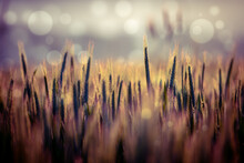 Abstract Blurred Nature Backgr...