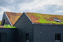 Buildings With A Green Roof Completely Covered With Vegetation. Extensive Green Sustainable Sedum Barn Roof With Succulent Plants. Roof Greening With Succulents. Skylight In The Middle Of The Roof