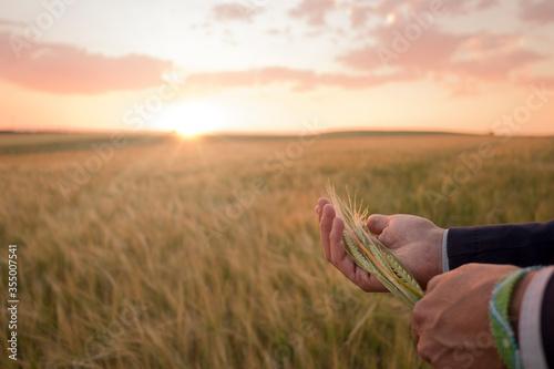 Photo Granjero con una espiga de cereal en la mano con la cosecha al fondo al atardece