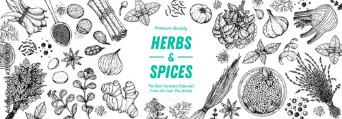 Fotografie, Obraz Herbs and spices hand drawn vector illustration