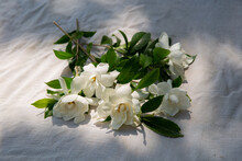 Bunch Of Gardenias In Dappled ...