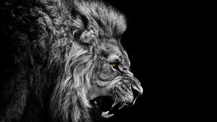 lav na crnoj pozadini
