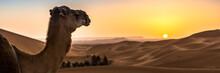 Merzouga In The Sahara Desert ...