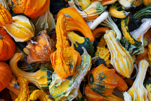 Colorful Autumn Gourds In A Pile
