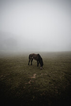 Horse Grazing In Field On Fogg...