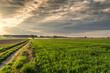 pola i łąki wczesnym latem w Polsce