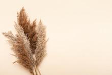 Dried Flowers. Nature Mockup B...