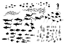 Set Of Sea Wildlife