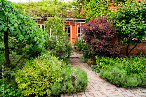 Fototapeta spring garden in the yard. house entwined with ivy.