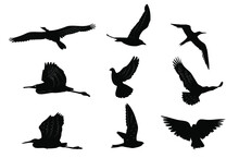 Flying Birds Silhouettes Colle...