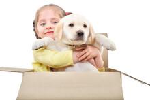 Cute Girl With A Labrador Pupp...