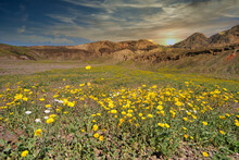 Rare Spring Rains In Death Valley California Bring Wildflowers And A Salt Lake