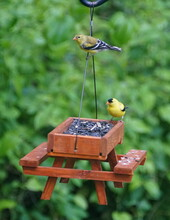 A Pair Of American Goldfinch E...