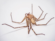 Dead Of Spider On White Backgr...