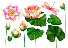 Set With Lotuses Flowers,leave...