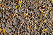 Yellow Fallen Leaves On A Cobb...