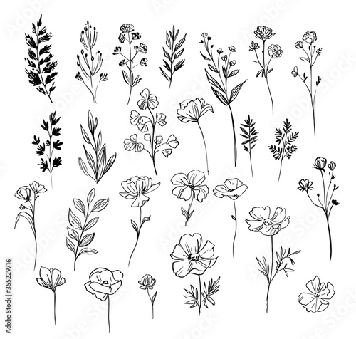 Set of floral and plant elements. Vector sketch. Linear floral elements for design.