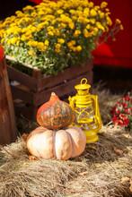 Harvest Of Pumpkin. Vintage Iron Lantern In Autumn Scene Outdoor. Autumn Vintage Decor With Lanterns And Pumpkins.