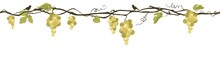 Grapevine With Birds / Seamles...