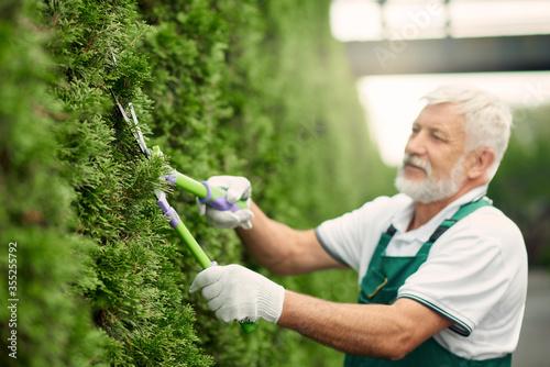 Eldery male gardener using scissors for bushes. Canvas