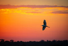 Heron Flying Under The Sunset ...
