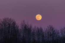 Winter Full Moon Over Forest
