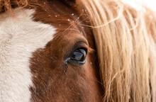 Soulful Eye Of A Horse