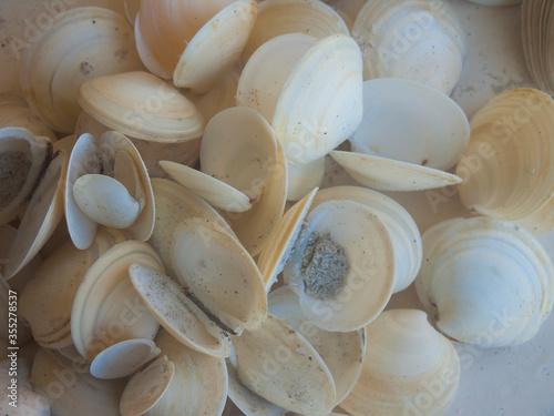 фотографія Shells Gathered on Beaches of Sanibel Island, Florida, USA