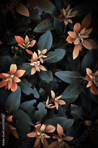 Liście różanecznika zrobione od góry w pięknych barwach, jako tło