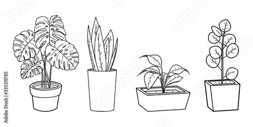 Fototapeta Houseplants vector illustration set - outline indoor flowers in pots with leaves. Line art doodle drawings isolated on white background for floral design. EPS 10 format obraz na płótnie