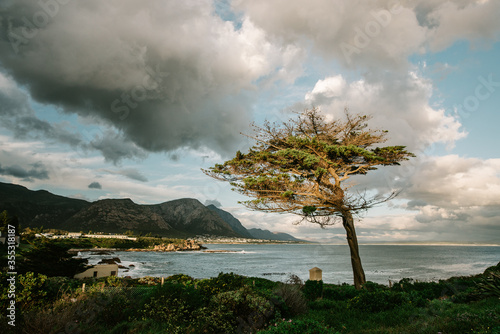 lone windswept tree with sea in the background Canvas-taulu