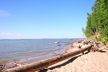 A Large Dumped Log Of A Tree Lies On A Sandy Beach At The Edge Of The Forest On A Summer Sunny Day.