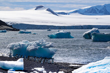 Adelie Penguins On A Rocky Beach With Icebergs And Glaciers In The Background. Brown Bluff In Antarctica.