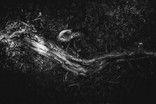 Magic Forest, Roots And Branches