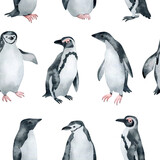 Watercolor seamless pattern with penguins. Chinstrap, African, Adelie penguin. Wild northern Antarctic animals. Cute grey bird for baby textile, wallpaper, nursery decoration - 355384592