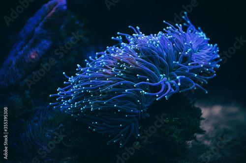 Fotografie, Tablou Anemone sea creature macro night shot