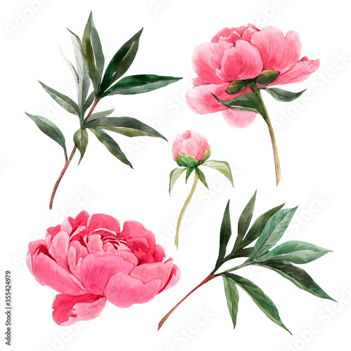 Fototapeta Beautiful set with watercolor gentle pink peony flowers. Stock illustration. obraz