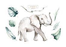 Watercolor African Elephant Animal Isolated On White Background. Savannah Wildlife Cartoon Zoo Safari Poster. Jungle Decoration