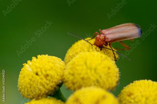 owad w trakcie obiadu - 355443121