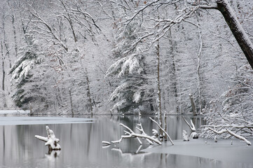 Panel Szklany Zima Winter landscape of snow flocked trees on the shoreline of Hall Lake with reflections in calm water, Yankee Springs State Park, Michigan, USA