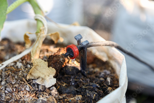 Fotografija close up of water drip system in for Plant Nursery