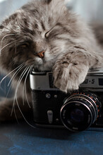 Gray Tabby Cat With Vintage Ca...