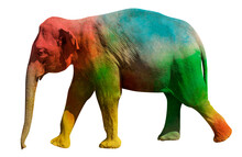 Walking Elephant Painted In Psychedelic  Colors Red, Green, Blue And Yellow. Side View Isolated On White Background.
