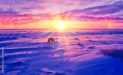 Obraz na płótnie Sunset in Canadian Arctic ith polar bear