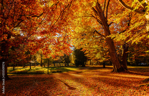Fototapeta Autumn landscape beautiful colored trees at the park, glowing in sunlight. wonderful picturesque background. color in nature. gorgeous view. Amazing Nature scenery. obraz na płótnie