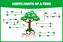 Write Parts Of A Tree. Think A...