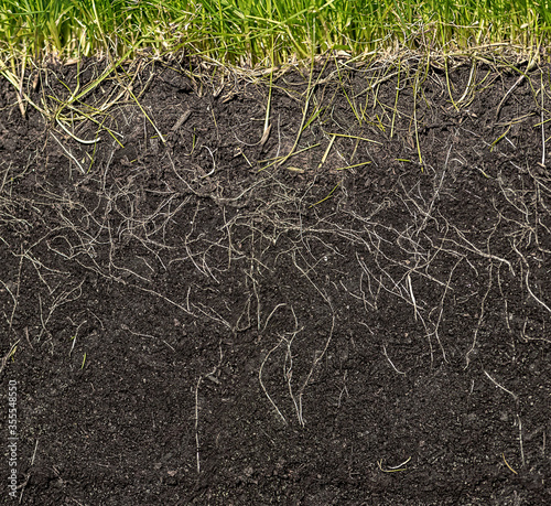 Valokuvatapetti grass with roots and soil
